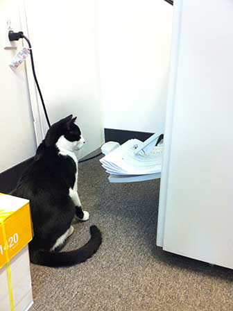 Simon watches the printer